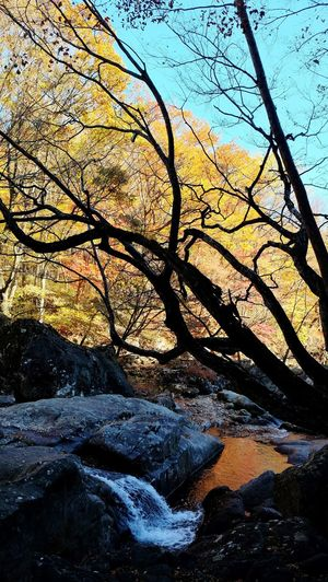 Bare tree by river in forest against sky