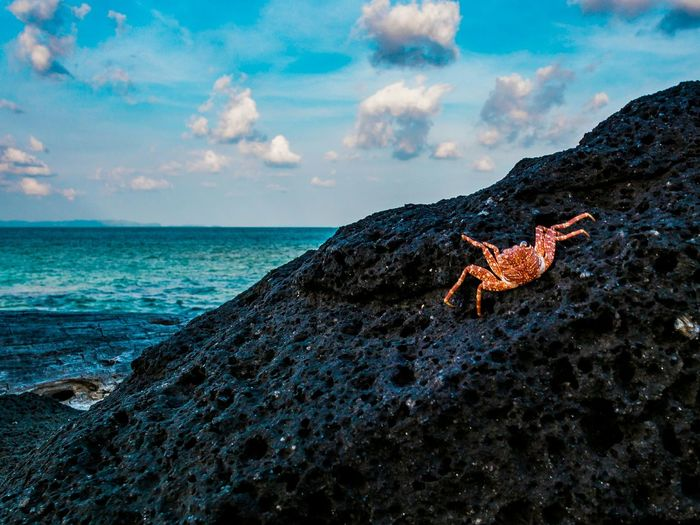 High angle view of crab on rock at beach against sky