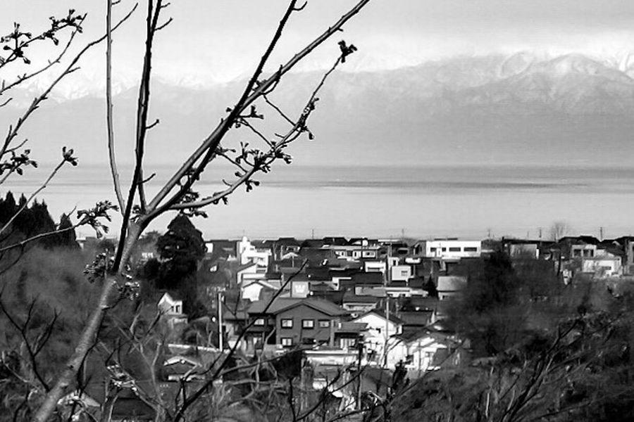 [ それは2006年でした ] A Decade Ago My First Camera Himi City Toyama Japan 2006 Collection : Japan Blackandwhite Photography Black And White Black And White Collection  Sakura