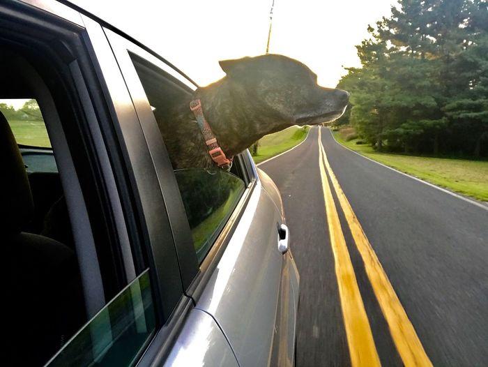 Pet Portraits Joy Ride Fresh Air Long Car Rides Fur Baby Dog Mom Beautiful