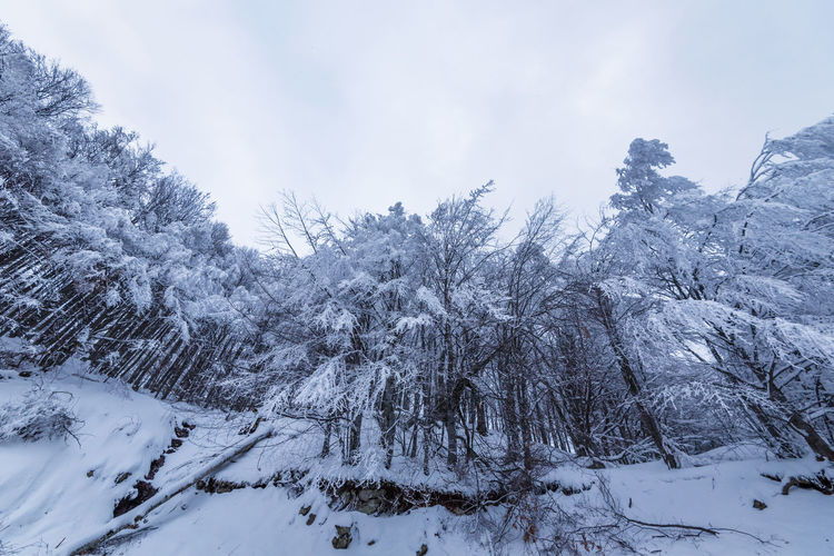 Snow covered plants and trees against sky
