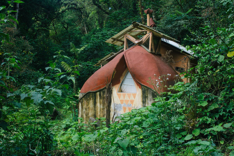 Architecture Bioconstruction Building Exterior Ecology Forest Green Color House Nature Offthegrid Permaculture Tribe