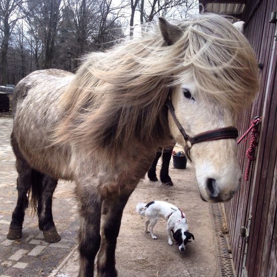 Magni ❤️ Horses Love Horses Pony Pferde