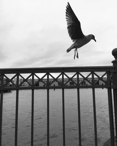 Stop the words now. Open the window in the centre of your chest and let your spirit fly in and out Hanging Out Birds Freedom EyeEm Nature Lover Blackandwhite EyeEm Black&white! B&w San Francisco Ocean Flying Ready Nature FlyingSolo