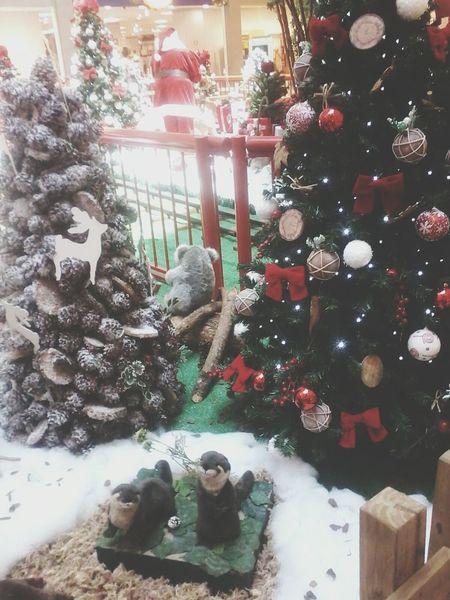 Christmas Tree Natale2014 Mary Christmas