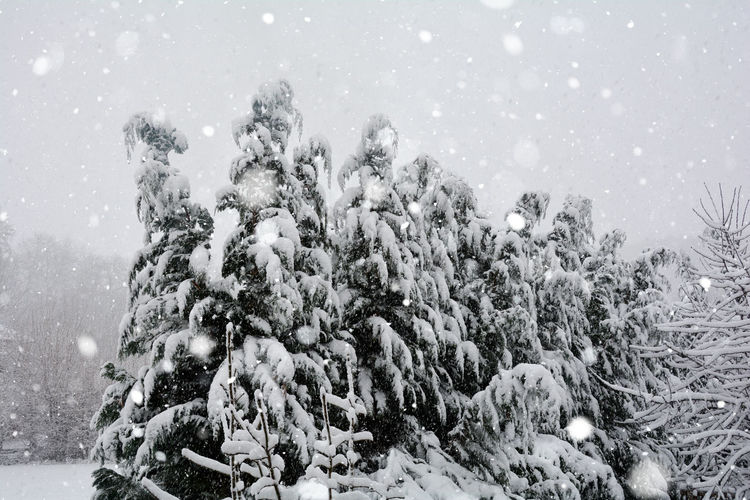 Snow-covered tree in heavy snow with copy space