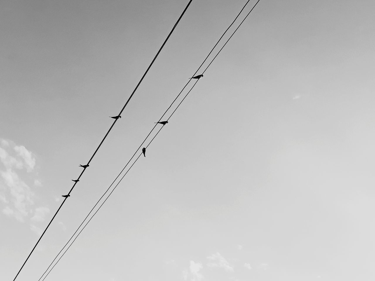 sky, low angle view, cable, electricity, connection, power line, no people, technology, nature, bird, day, cloud - sky, animal themes, animals in the wild, vertebrate, animal, power supply, animal wildlife, outdoors, fuel and power generation, telephone line, flock of birds