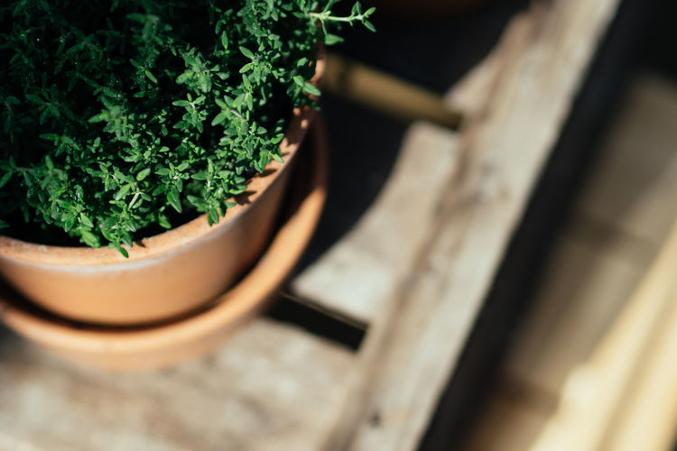 Thyme Herbs Beauty In Nature Botany Close-up Day Flower Pot Food Food And Drink Foodphotography Freshness Gardening Green Color Growth High Angle View Houseplant Leaf Nature No People Plant Plant Part Potted Plant Selective Focus Table Tea Cup Thyme Wood - Material