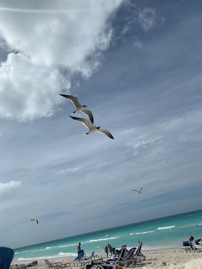 Sea Water Sky Flying Cloud - Sky Vertebrate Bird Beach Motion Animal Themes Animal Mid-air Horizon Over Water Nature Animals In The Wild Animal Wildlife Horizon Land Group Of People Seagull