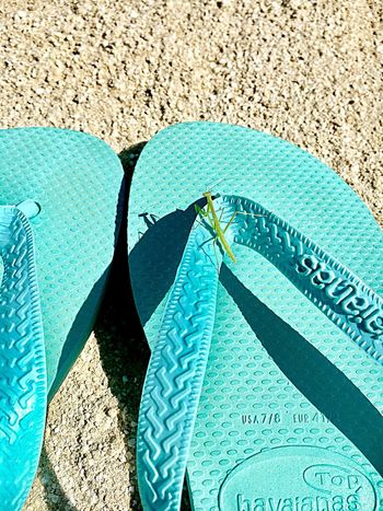Beach Sandals Mantes Skyblue Green White IPhone 6s Tokyo Japan