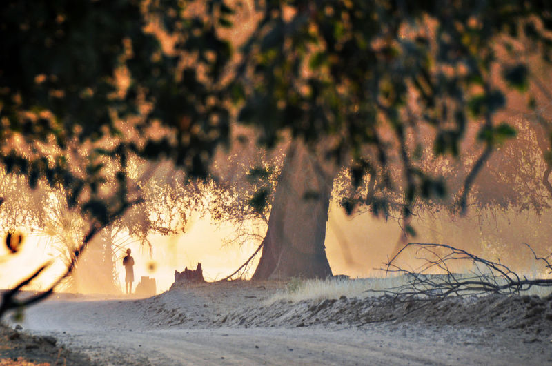 Namibia Land Nature Tree No People Heat - Temperature Plant Burning Motion Fire Sunlight Flame Selective Focus Outdoors Sunset Fire - Natural Phenomenon Beauty In Nature Forest Environment Field Beach
