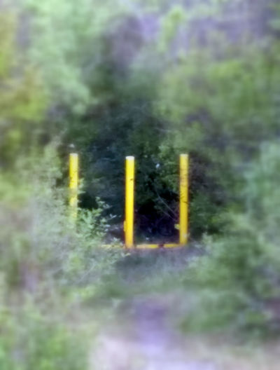 Trail Barrier Beauty In Nature Close-up Day Green Color Growth Nature No People Outdoors Plant Selective Focus Yellow Post Barriers