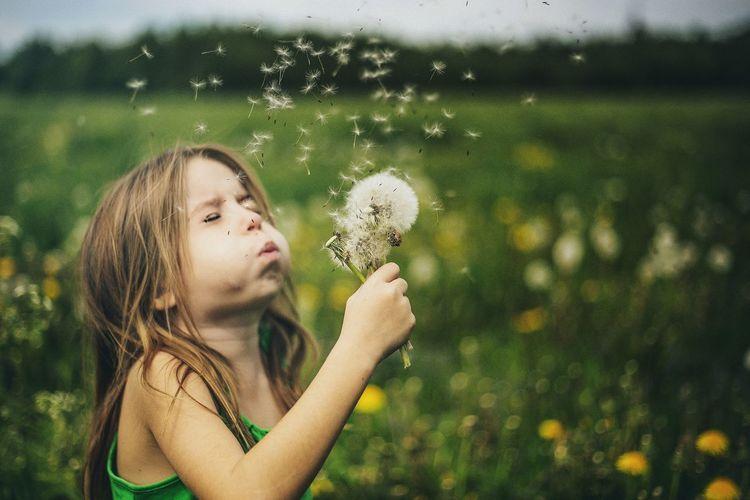 Cute little girl is blowing on fluffy dandelion