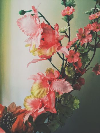 Flowers Shadow Light And Shadow Blooming IPhone Fine Art Photography Home Is Where The Art Is