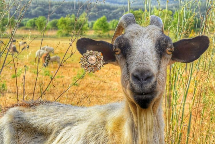 EyeEm Selects One Animal Mammal Animal Themes Looking At Camera Animal Wildlife Portrait Animals In The Wild Animal Day Outdoors Nature Domestic Animals No People Grass Close-up