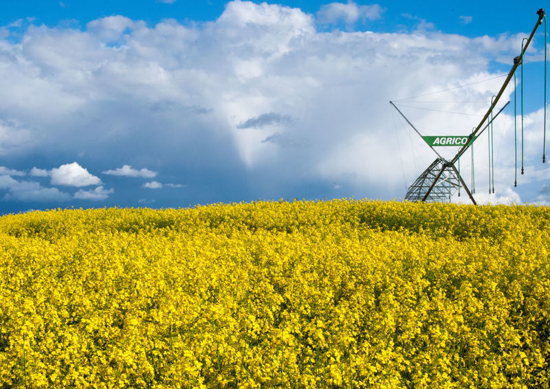 Agriculture Beauty In Nature Cloud - Sky Crop  Environment Farm Field Flower Flowering Plant Fuel And Power Generation Growth Land Landscape Nature No People Oilseed Rape Outdoors Plant Rural Scene Scenics - Nature Sky Springtime Yellow A New Beginning