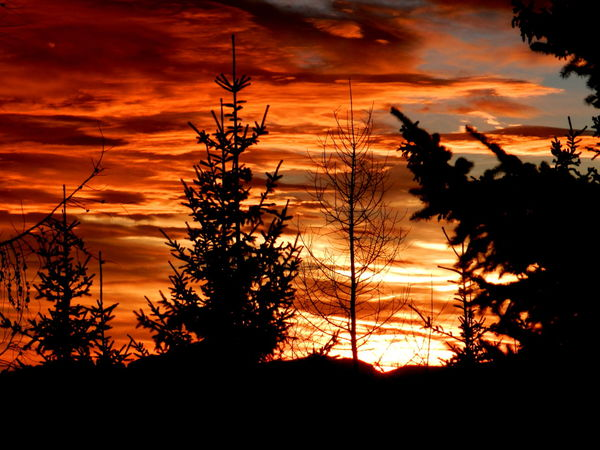 Cloud - Sky Dramatic Sky Scenic Beauty In Nature Growth Nature No People Orange Color Outdoors Plant Silhouette Sky Sunset Tranquility Tree Foggy Scenics Pine Tree Treetop Woods Romantic Sky Calm Tranquil Scene Evergreen Tree
