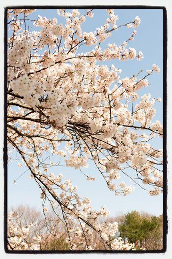 Cherry 2014 Nature