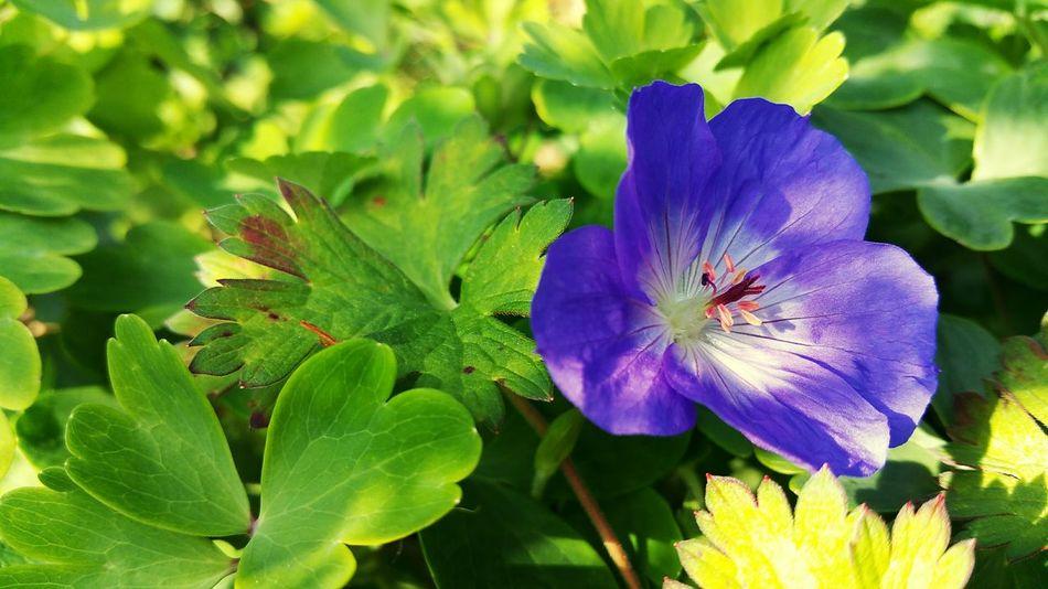 Nature Photography Nature Fleurs Fleur Flowers Flower Flower Photography