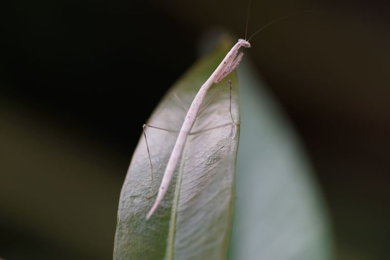 Close-up of insect on leaves against black background