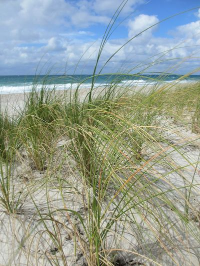 The Seashore Seagrass Beach Sea Grass Sky Cloud - Sky Nature Tranquility Scenics Marram Grass Tranquil Scene Beauty In Nature Landscape Outdoors Horizon Over Water No People Water Day Ocean Seashore Florida Lauderdale By The Sea