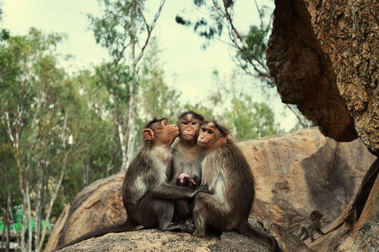 Low Angle View Of Monkey Family Sitting On Rock