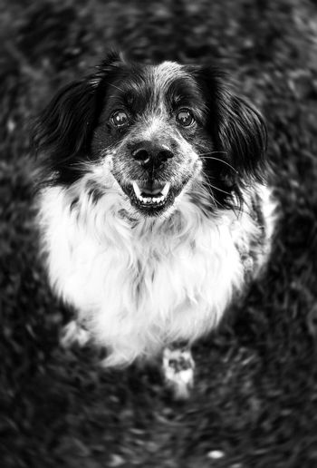 Dog Pets Domestic Animals Mammal One Animal Animal Themes Portrait No People Outdoors Day Close-up Blackandwhite Furry Friends Furry Cuteness Focus Object Idrija Best Friends Paws For Thought Pet Portraits