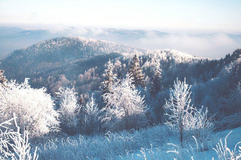 Hala Jaworzyna pod Skrzycznem Frozen Śląsk Beskidy Skrzyczne Jaworzyna Szczyrk EyeEm Selects Winter Snow Pinaceae Nature Cold Temperature Tree Pine Tree Forest Mountain Landscape Beauty In Nature Outdoors Wilderness Sky Rural Scene