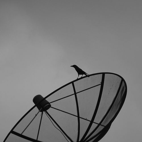 Low angle view of silhouette bird on satellite dish against clear sky
