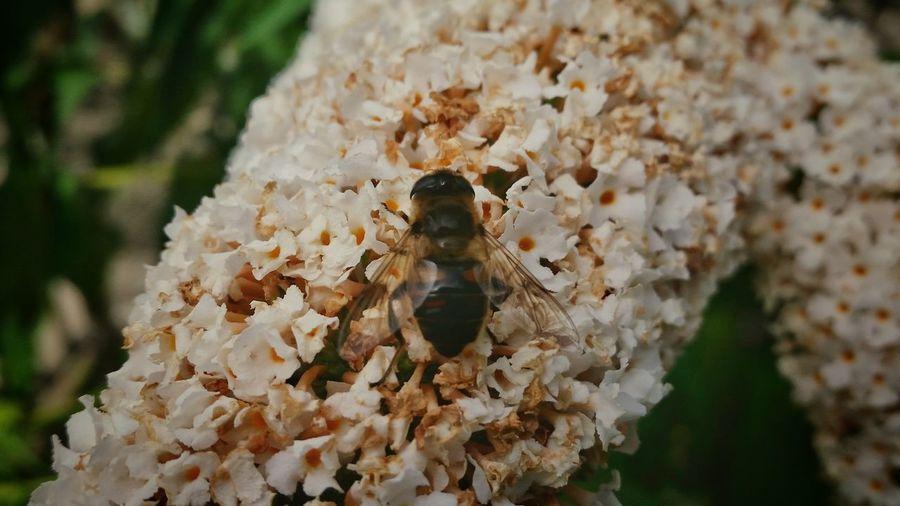 Flowers Bees