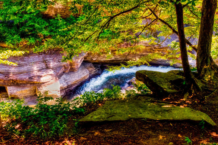 EyeEm Best Shots EyeEm Nature Lover EyeEm Selects EyeEm Gallery EyeEmNewHere Autumn Beauty In Nature Branch Day Eye4photography  Forest Growth Leaf Moss Nature No People Outdoors Plant Scenics Tranquility Tree Tree Trunk Water Waterfall