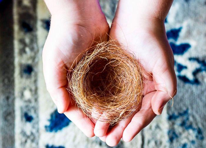 Close-up of hand holding animal nest