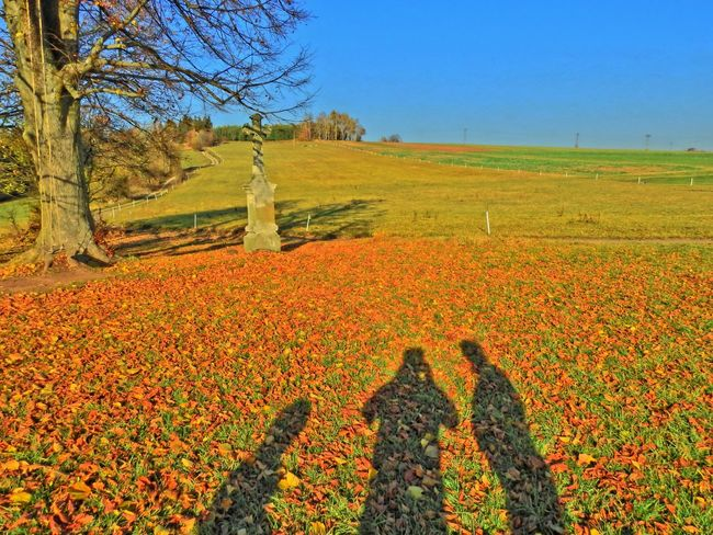 Abundance Autumn Beauty In Nature Blue Change Day Field Flower Fragility Grass Growth Idyllic Landscape Nature Orange Color Outdoors Plant Rural Scene Scenics Season  Sky Tranquil Scene Tranquility Tree Yellow
