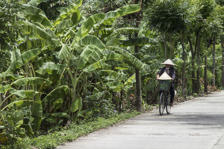 Bycicle Day Green Green Color Growth Montains    Nature Nature Outdoors Palm Plant Rainy Days Sea Roses Streetphotography Tree Vietnam Vietnamese Vietnamese Food Walkway