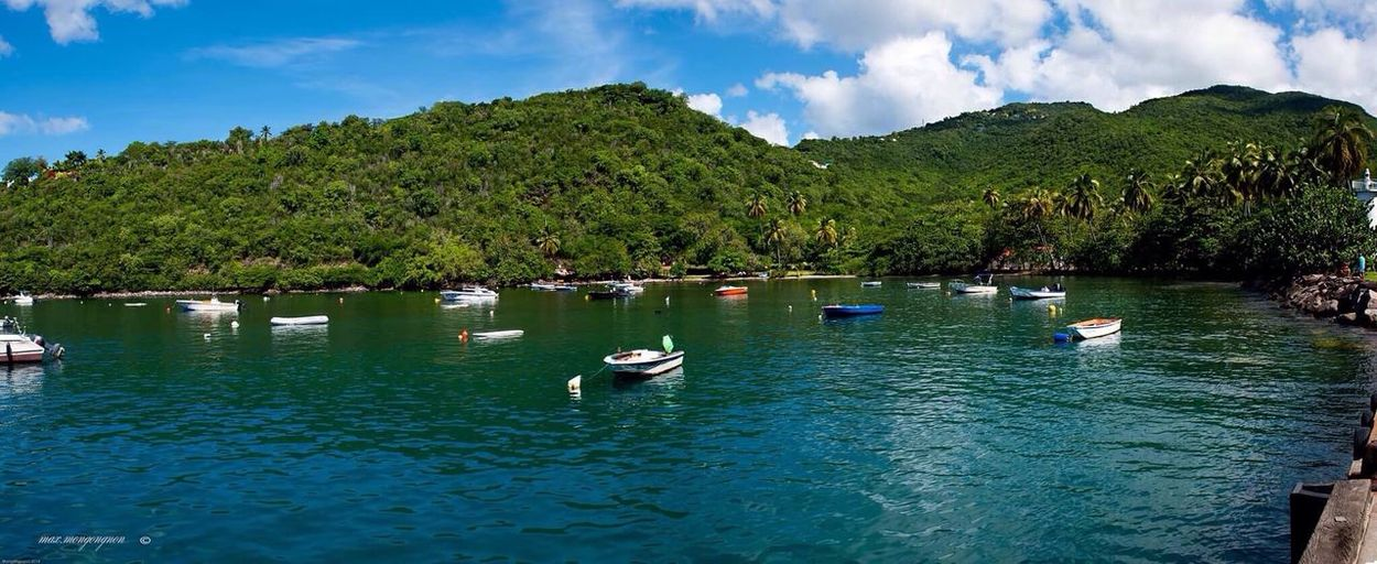 Anse à La Barque. Tree Water Swimming Bird Outdoors Nature Sky Animals In The Wild Day Nautical Vessel Guadeloupe Beauty In Nature Landscape Nature Tourism aAnimal ThemesnNo PeoplebBeauty In NaturesSwan Guadeloupe Lake (null)