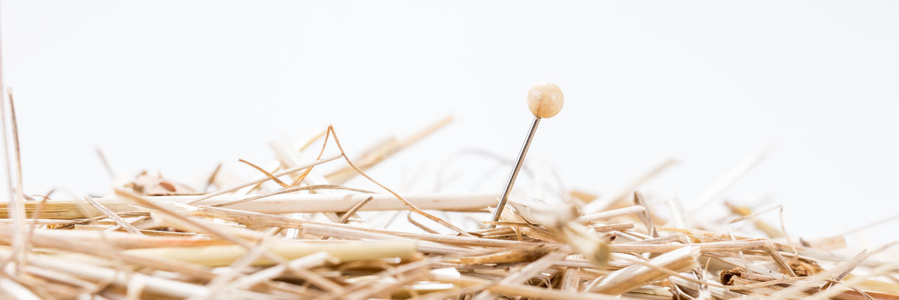 A needle is in the haystack. Proverb for challenge and search Haystack Hope Isolated Brown Chaotic Close-up Copy Space Day Find Idea Nature Needle No People Outdoors Plant Search Searching Selective Focus Symbol Symbolic  White Background