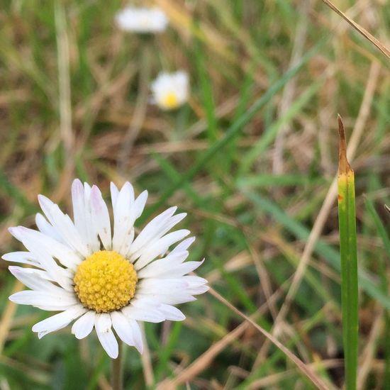 Wochenende Gudensberg Wandern Blume Natur Herbst