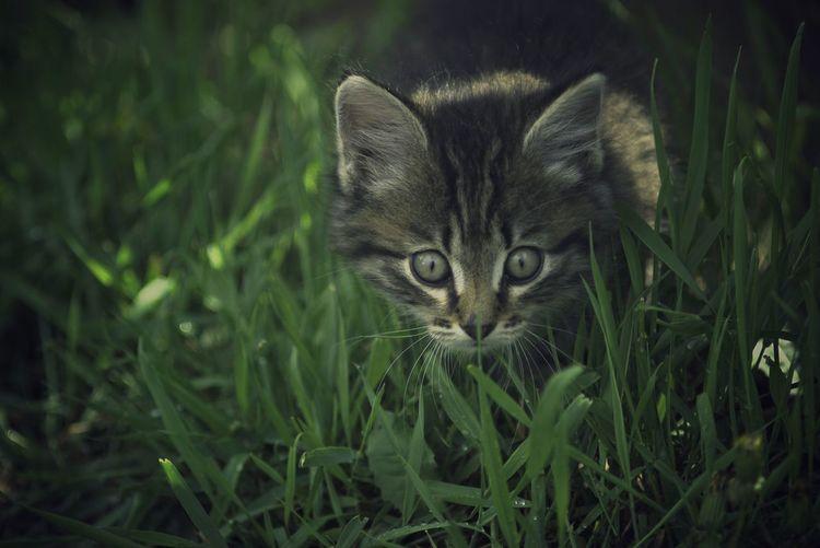Portrait of tabby kitten on field