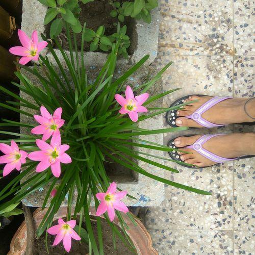 Flower Low