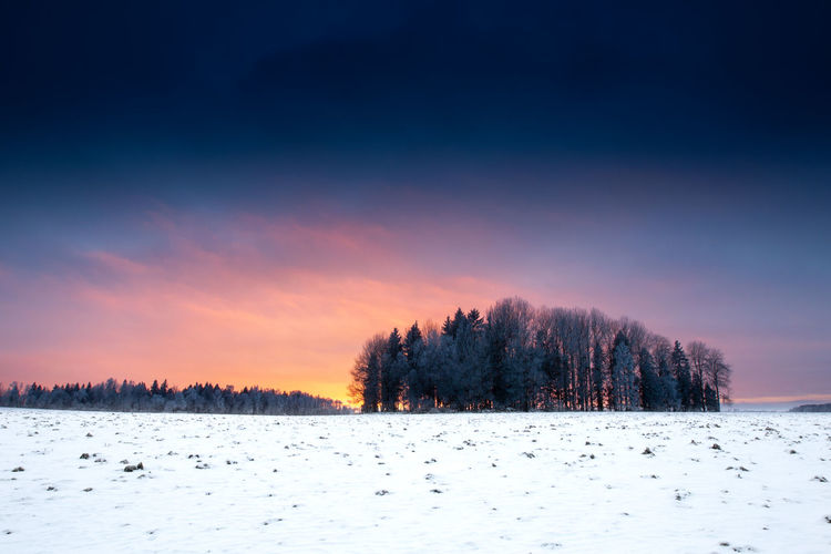 Sunlight Winter Beauty In Nature Close-up Cold Cold Days Cold Temperature Focus On Foreground Gold Colored Land Nature Sky Snow Sun Sunset