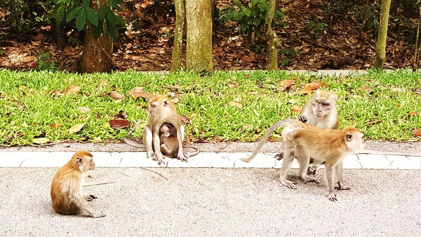 Happy Family Monkeys Bondingtime Taking Photos Enjoying Life My Freetime !