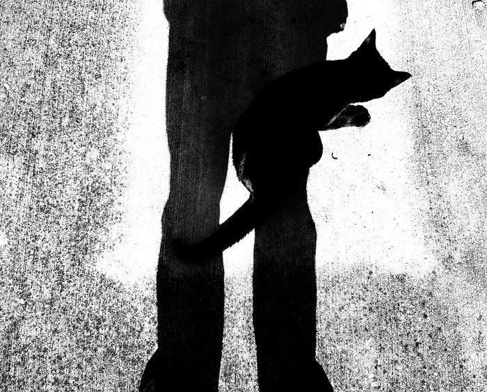 Black Cat. Silhouette Shadow Focus On Shadow Day Outdoors Blackandwhite Photography Happiness Subjective Emotion Photographer Grain Narratives Art Photography Photography Taking Photos Galaxys8 Samsung S8+ Mobilephotography Film Photography Monochrome Photography Eyeemphoto EyeEm Gallery EyeEm Best Shots For The Love Of Photography Emotions Captured