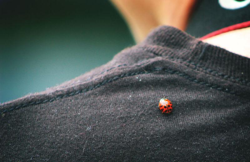 Close-up of ladybug on shoulder