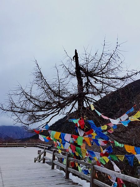 Ice Age Dead Trees Dead Branches Trees Branches Mountains Colorful Flags Flags Film Path Enviornmental Awareness Enviornmental Landmark Huanglong Nature Reserve Sichuan China Travel Backgrounds Landscape Wood Deck Wood Wooden Wooden Floor Wooden Structure