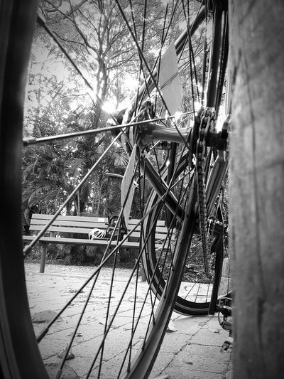 Pitstop Fixie Fixed Gear
