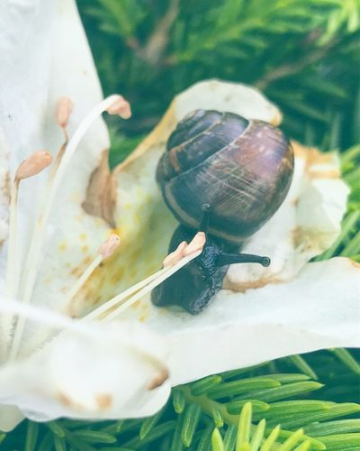 Animal Wildlife Animal Themes Animal Animals In The Wild One Animal Invertebrate Shell Beauty In Nature Plant Animal Shell Fragility Flower No People Close-up Gastropod High Angle View Nature Vertebrate Marine Snail