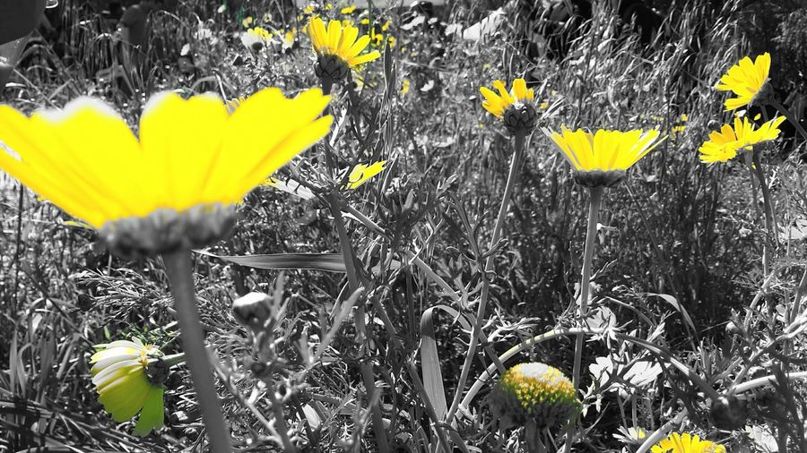 Flowers Flowerporn Flower Collection Spring Flowers Flowers,Plants & Garden Flower Collection EyeEm Flower Flower#garden#nature#ecuador#santodomingoecuador#eyeEmfollowers#iphoneonly#nofiltrer#macro_garden#pretty#beautiful#followme#sho