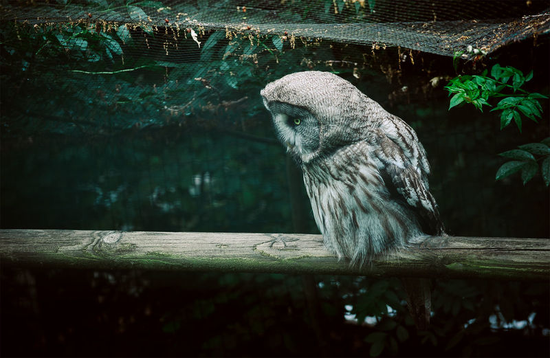 Side view of owl on wooden log