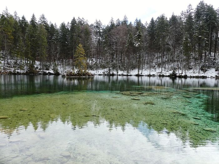 Badersee Lake View Bavaria Trees Beauty In Nature Background Calm Reflections In The Water Nature Betterlandscapes Tranquil Scene Scenics - Nature Outdoors Scenics Bavarian Landscape Water Tree Winter Lake Cold Temperature Reflection Snow Sky Green Color Tranquility Spruce Tree Evergreen Tree Snowcapped Standing Water