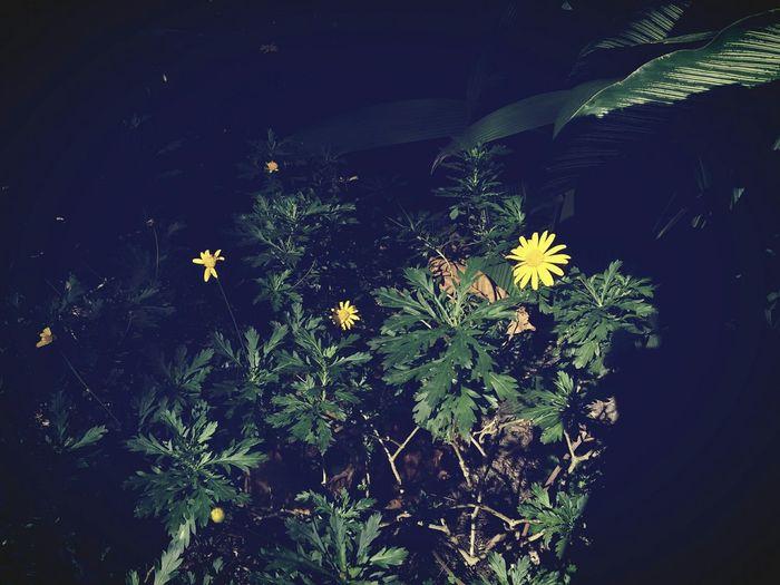 Flores :3